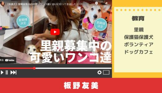 YouTubeで学ぶ保護猫・保護犬ボランティアとは